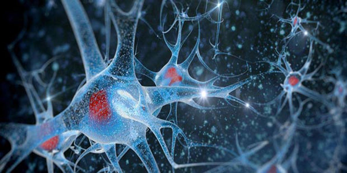 Sangamo's Research in Alzheimer's Significantly Reduced Tau Levels in Mice